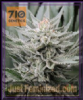 710 Genetics Coastal OG Female 5 Weed Seeds